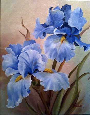 Blue Bearded Iris