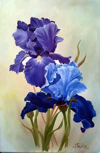 Purple and Blue Iris